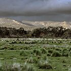 Snowy Mountains - NSW, Australia by Wendy  Meder