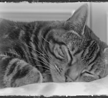 Sleeping Cat in Black and White by mariesym