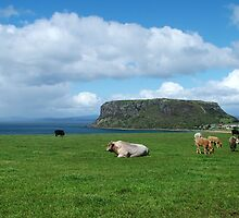 Farm land and the Stanley nut on the far nor west coast of Tasmania by phillip wise