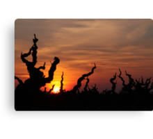 Sun Over the Grapes Canvas Print