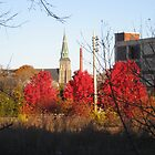 three red maples urban stormoak lonewind by Stormoak Lonewind