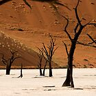 Sand Sea, Dead Vlei 6 by David Tovey