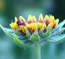 Lady Bug gets a leg up  by Judy Grant