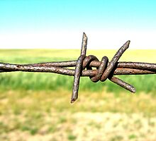 barbwire by kachr00