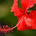 Red... by Elba Parra