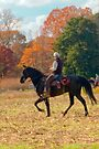 Field Trial Rider by Mary Campbell