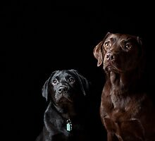 Dogs by Provider93