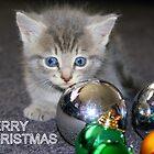 Kitty Xmas by Kristina K