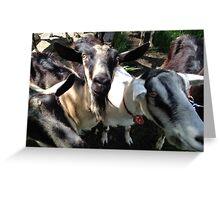 Lazy Lady Goats Greeting Card