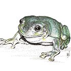 Green Tree Frog by Melf