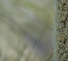 Xanthorrhoea shallow focus by Colin12