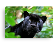 Black Jag Canvas Print
