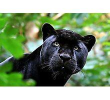 Black Jag Photographic Print