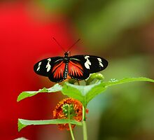 Butterfly on a perch by 123shop