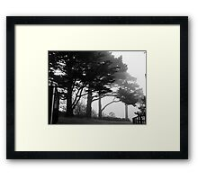 Trees In A Veil Framed Print