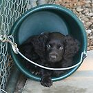 'Baby' in a Bucket by Pamela Kadlec