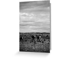 High Country Grazing B & W Greeting Card