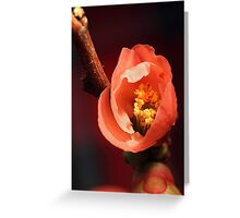 In the Pink. Greeting Card