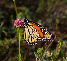 """Monarch Delight II by Lenora """"Slinky"""" Regan"""