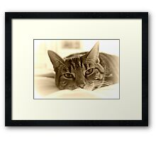 Dreamy cat in sepia Framed Print