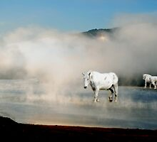 Unicorns in the Mist by Judi Taylor
