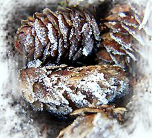 frosty pine cones ... by SNAPPYDAVE