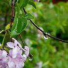 Garden Teardrops by ctheworld
