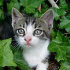 Little curious kitten by Ana Belaj