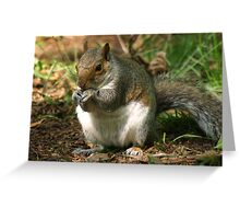 I`m Nuts About You!! Greeting Card