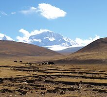 Shishapangma Base Camp Tibet 4850m by Louise Levy