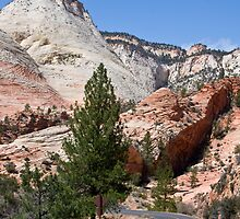 Into Zion Canyon by Nickolay Stanev