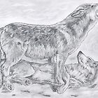 Wildlife Drawings by Peter Allton