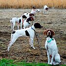 Dogs on the Line II © by Mary Campbell