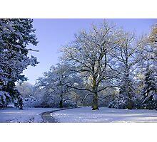Path through Winter Wonderland Photographic Print