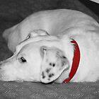 Winston resting by shortarcasart