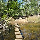 Stepping Stones across Edith River, Leliyn N.Pk. Northern Territory. by Rita Blom