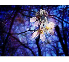 Grace Flower Bunch Photographic Print