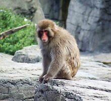 Monkey See Monkey Do by mawish ali