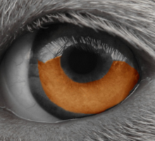Eye See You ~ Sticker