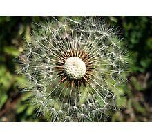 dandelion5 / dmuchawiec5 Photographic Print
