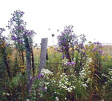 wild flowers by fence by greendarner