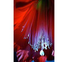 Balbize et la fleur no. 11 Photographic Print