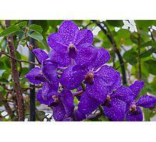 Purple Orchids Photographic Print