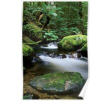 Taggerty River Tranquility Poster