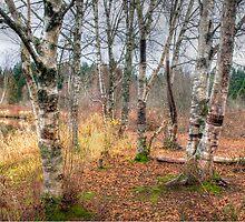 Pond near my house in Woodinville Washington by Jeffrey  Sinnock