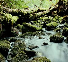 Tarkine stream below the falls by Jeff Barnard