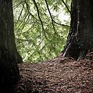 red woods 4 by angelo marasco
