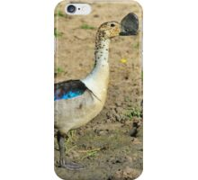 Knob-billed Duck - Funny and Beautiful Nature iPhone Case/Skin
