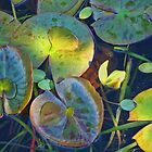 Water Lily Pads. by Bette Devine
