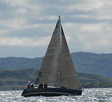 West Highland Week 2007 - DELINQUENT by Alisdair Gurney